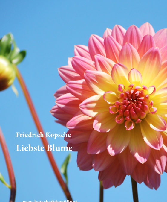 Liebste Blume