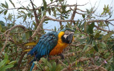 Abadiania`s  Naturvielfalt – Brasilien