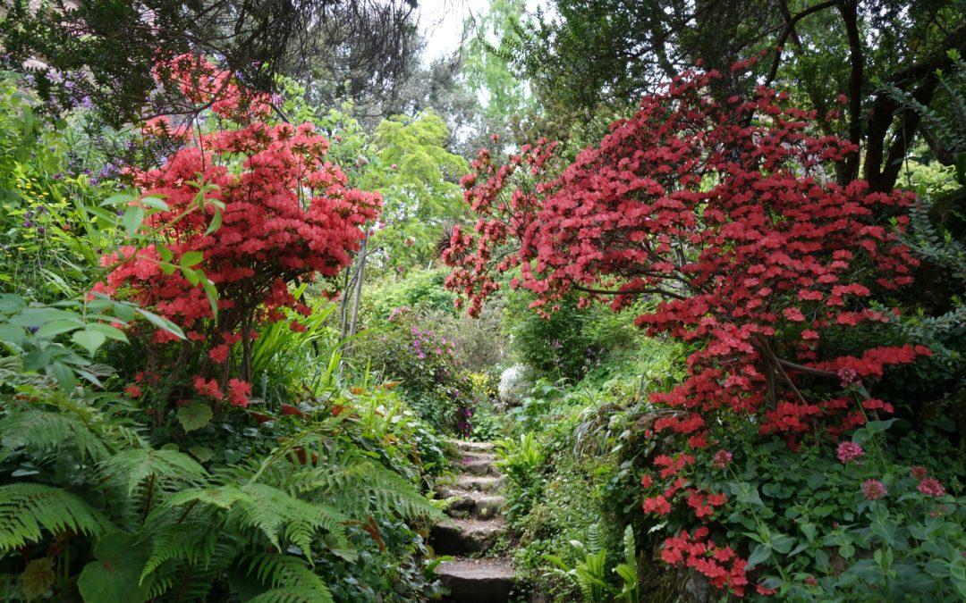 Heller Garden – Gardasee